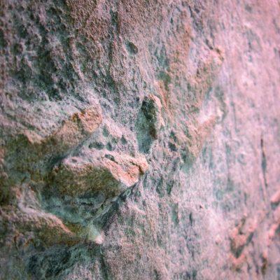 coelurosaurichnus grancieri 9